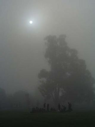 Sun shining through thick fog with silhouettes of tall trees and group of people
