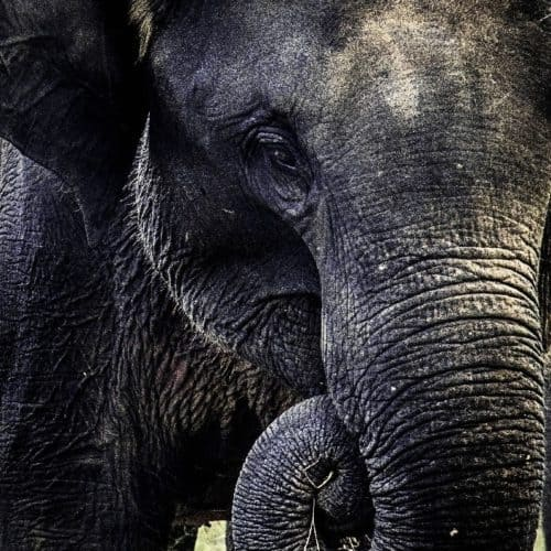 Close up photo of elephants head and trunk