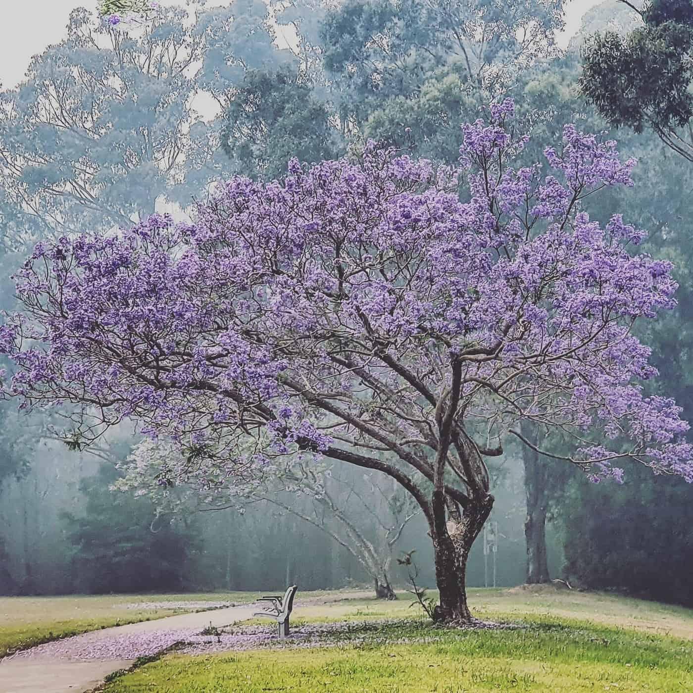 Eerie Peaceful Beauty